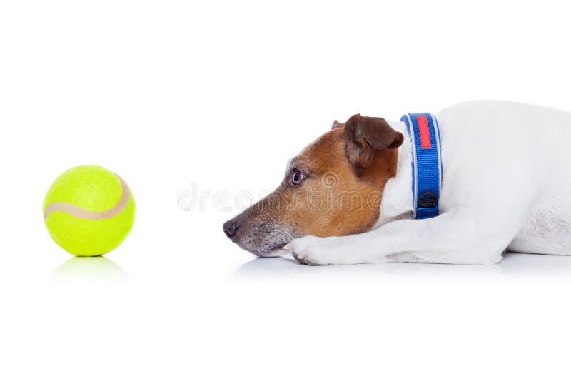 Boule de jeu de chien image stock