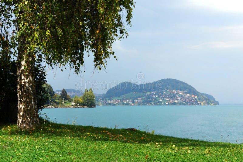 Bouleau sur la côte du petit lac suisse photos libres de droits