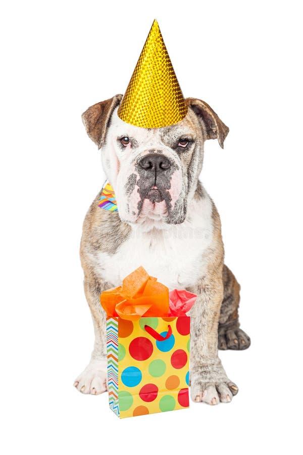 Bouledogue drôle avec le cadeau d'anniversaire photos libres de droits