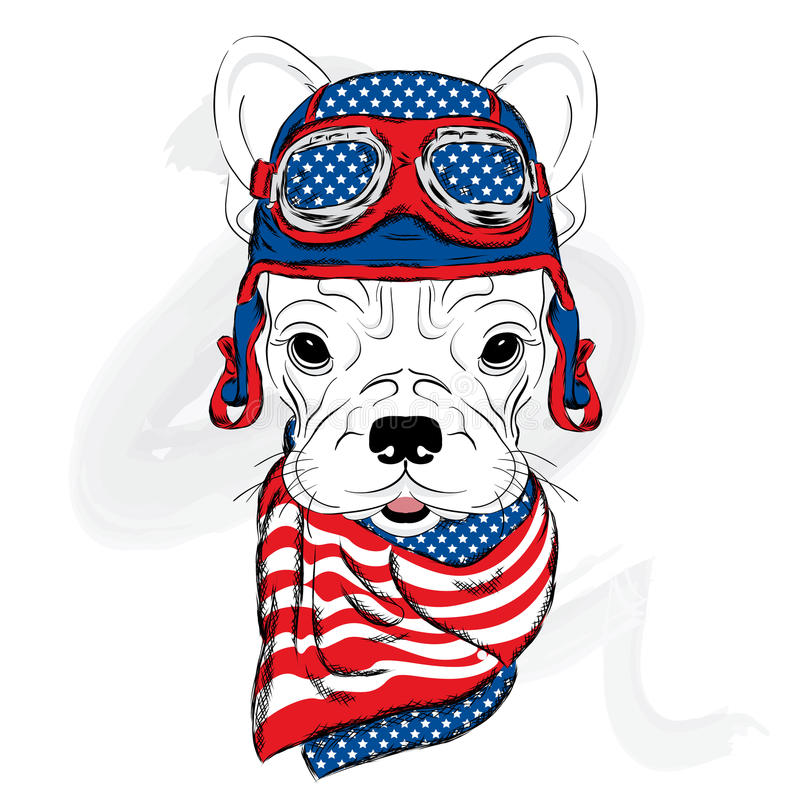 Bouledogue portant un casque coureur Pilote illustration stock