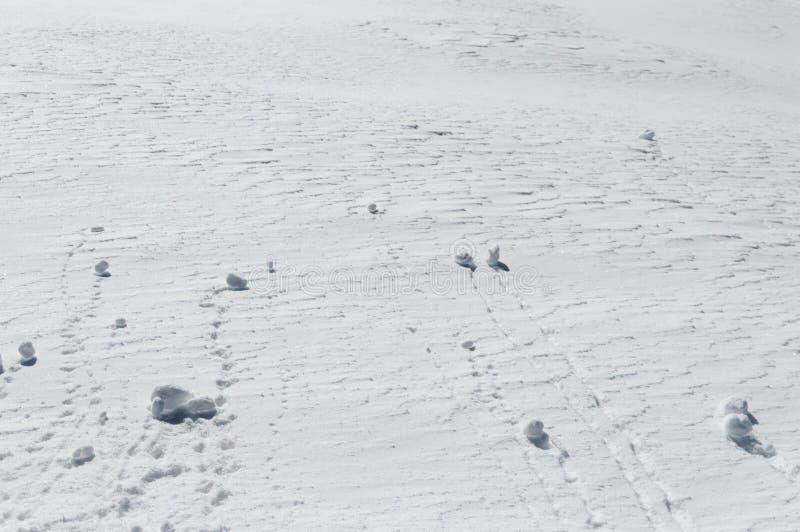 Boules de neige roulant vers le bas une pente neigeuse sur la montagne photo libre de droits