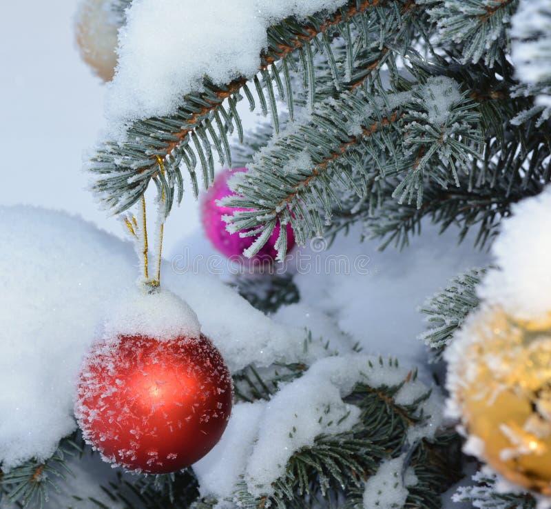 Boules de nouvelle année sur le sapin vivant avec le gel et la neige photos libres de droits