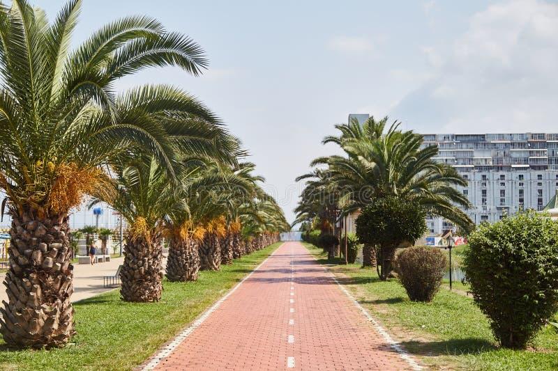 Boulevard de Batumi un jour ensoleillé Palmiers le long de la route Batumi georgia image libre de droits