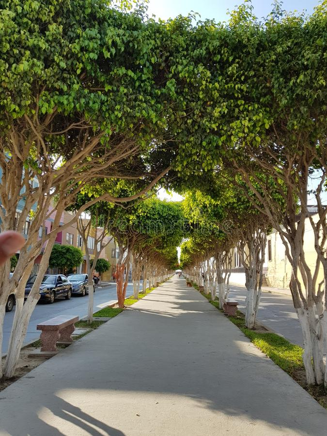 Boulevard van groene bomen stock foto's