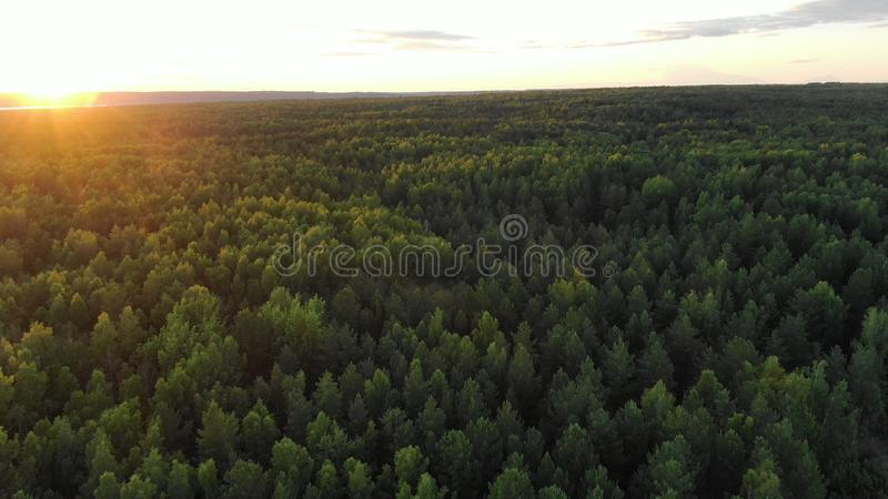 Boundless green forest lit by rising sun on wide river bank. Boundless green dense forest tops lit by rising sun on wide river bank under cloudy sky aerial view stock images