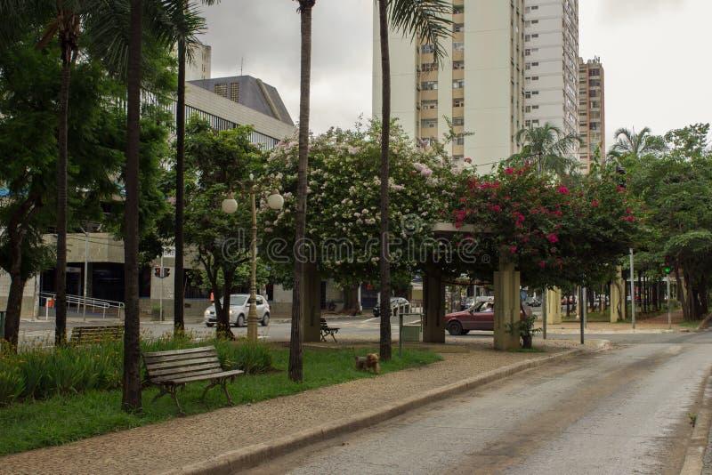 Boungainvillea在戈亚尼亚,巴西开花了街道 免版税库存照片