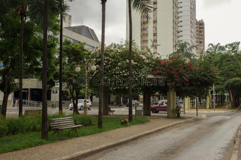 Boungainvillea flowered street in Goiania, Brazil. Cloudy day on Goias street avenue in the center of Goiania city, Brazil royalty free stock photo