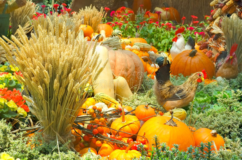 A Bountiful Autumn Harvest royalty free stock image
