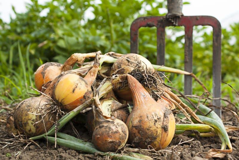 Bountiful harvest stock photo
