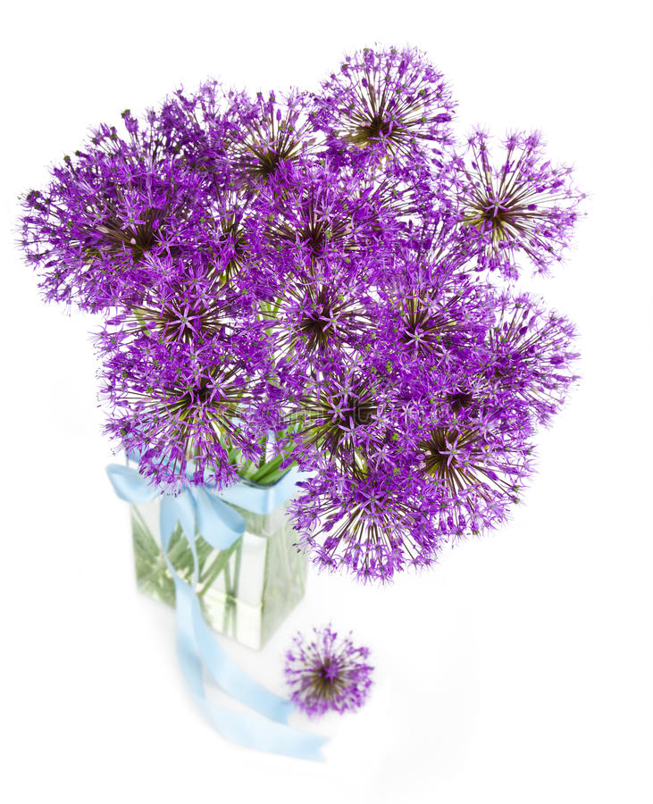 Bouqet of Allium / isolated on white. Bouqet of Allium / beautiful flowers / isolated on white stock image