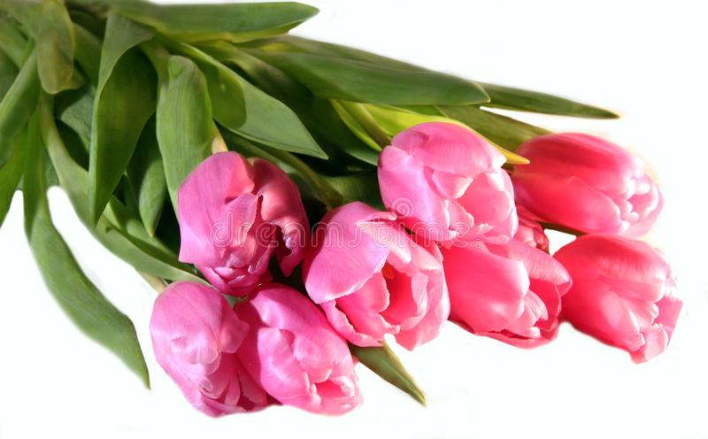 A bouqet of beautiful pink tulips stock images