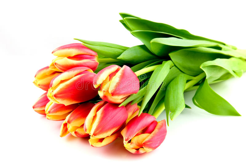 Bouqet red with yellow tulips. Isolated on white background royalty free stock images