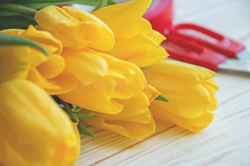 Bouqet of yellow tulips on a white wooden background and with red ribbon and scissors close up.  royalty free stock photos