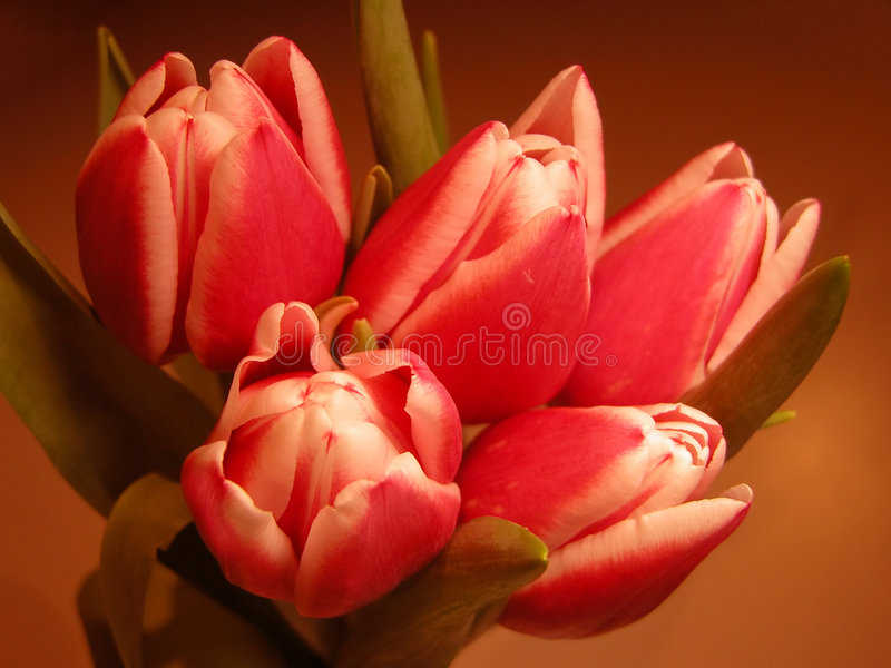 Download Bouquet stock photo. Image of detail, spring, tulip, flora - 104028