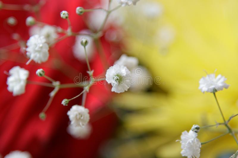Download Bouquet stock photo. Image of rose, gerbera, blossom - 13879704