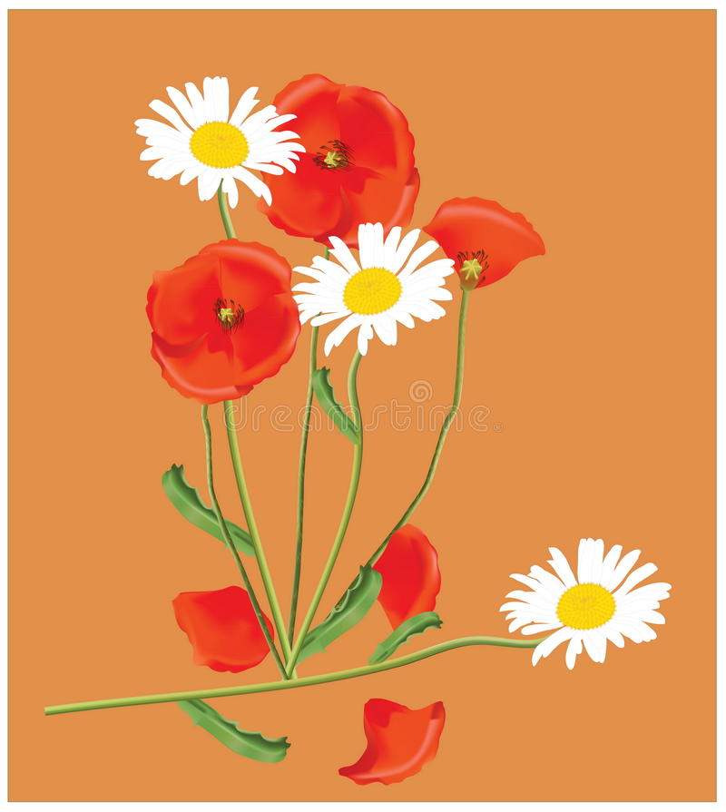 Download A bouquet stock vector. Illustration of chamomile, poppy - 23714798
