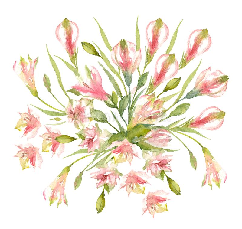 Bouquet of Alstroemeria Cultivar flowers, buds and bulbs on a white background. Pink Peruvian Lily. Watercolor illustration stock illustration