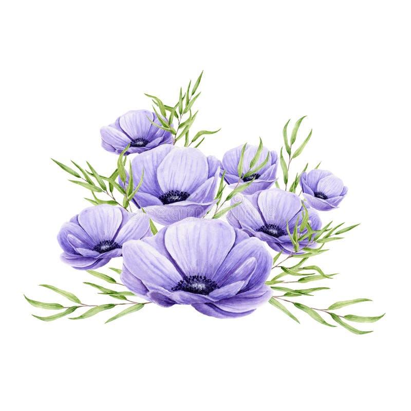Bouquet aquarelle d'anémones et de spriges d'eucalyptus isolés sur blanc. Fleurs violettes peintes à la main et feuilles vertes illustration de vecteur