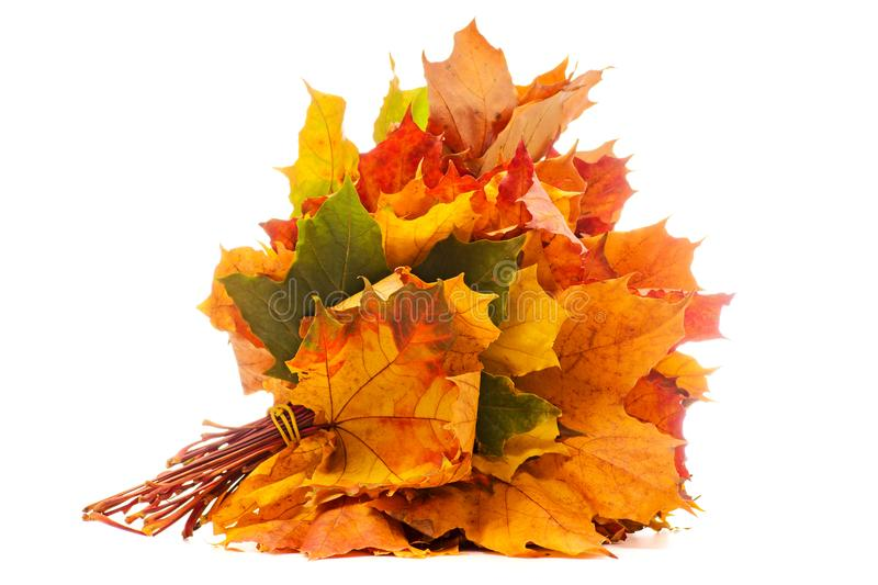 A bouquet of autumn leaves stock photography