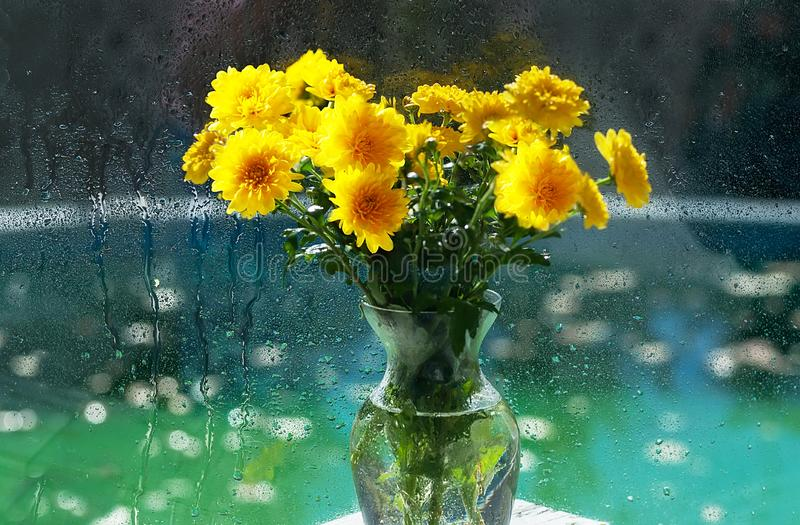 Bouquet of autumn yellow flowers of chrysanthemums. Art photo with sparkling sparkling background. stock photos