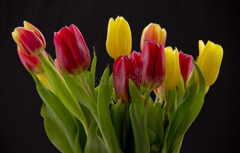Bouquet avec des tulipes images libres de droits