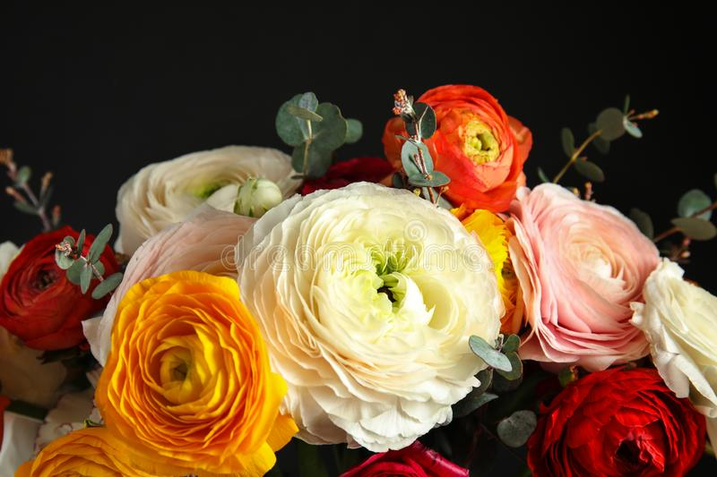Bouquet with beautiful bright ranunculus flowers on dark background royalty free stock images