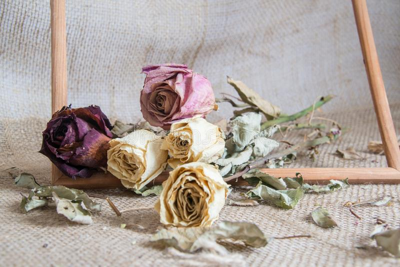 Bouquet of beautiful dried yellow and red roses stock image