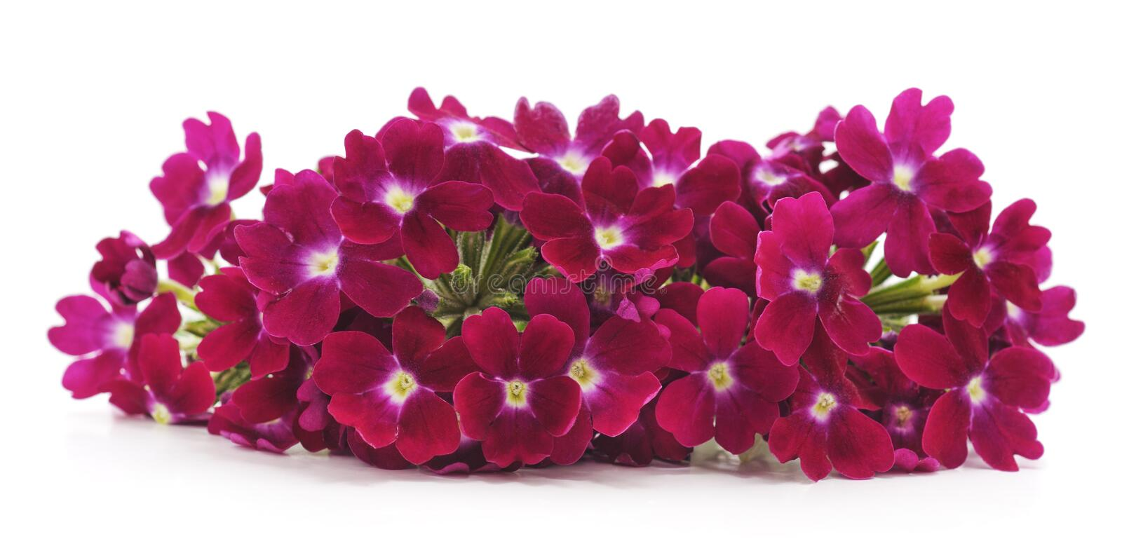 Bouquet of beautiful little flowers. royalty free stock images
