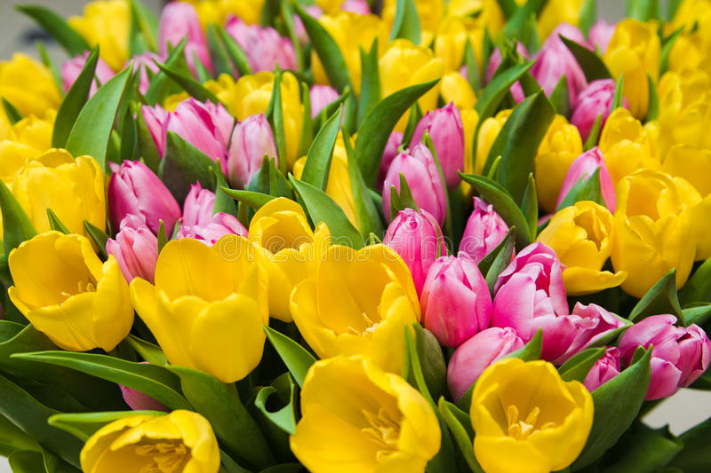 Download Bouquet Tulips Stock Image - Image: 29804151