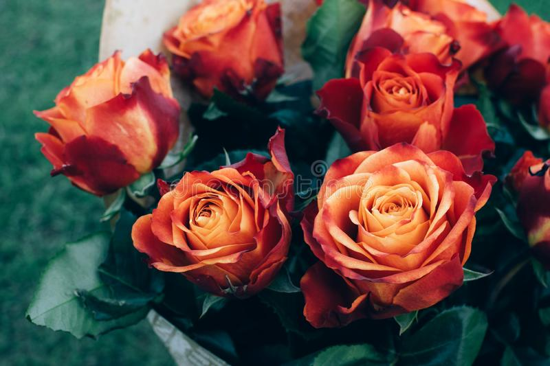 Bouquet of beautiful unique red, orange and peach colors roses on natural background. Bouquet of beautiful unique red, orange and peach vibrant colors roses on royalty free stock photography