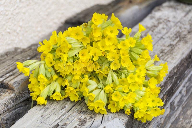 Bouquet of beautiful wild primroses flowers stock photos