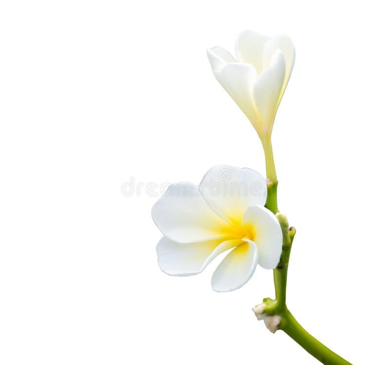 Bouquet-Blütenblume in weißer Farbe lizenzfreie stockfotografie