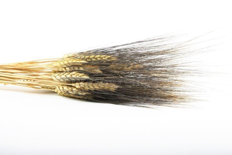 Download Bouquet Of Blackbeard Wheat Stock Image - Image: 12276261