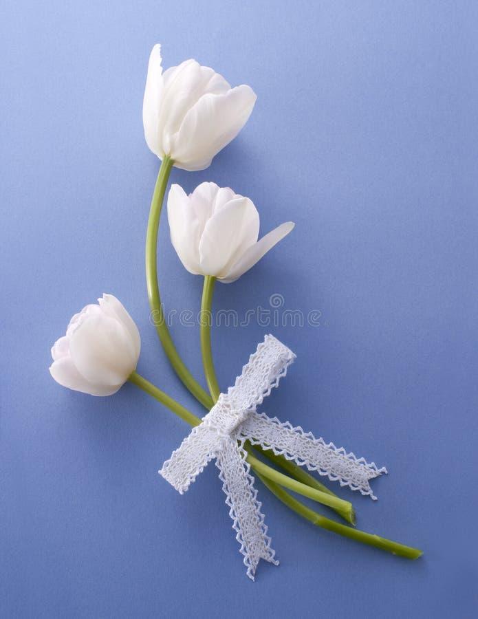 Bouquet blanc de tulipe image libre de droits
