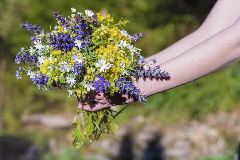 Bouquet of blooming forest flowers in woman's hand stock images
