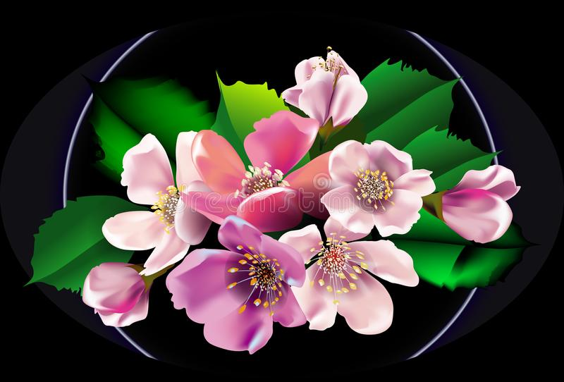 Bouquet of Blossom apple flowers on black background stock photography