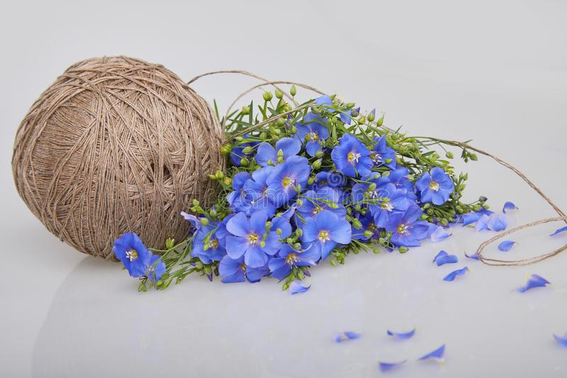 Bouquet of blue Flax flowers and Linen thread ball on a white background stock photo
