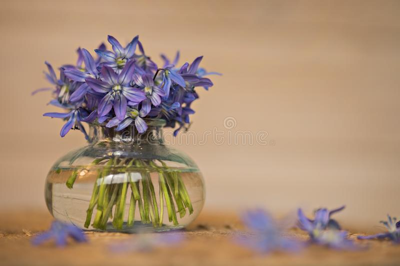 Bouquet of flowers in a vase on the table. A bouquet of blue flowers in a vase stands on a wooden table stock image