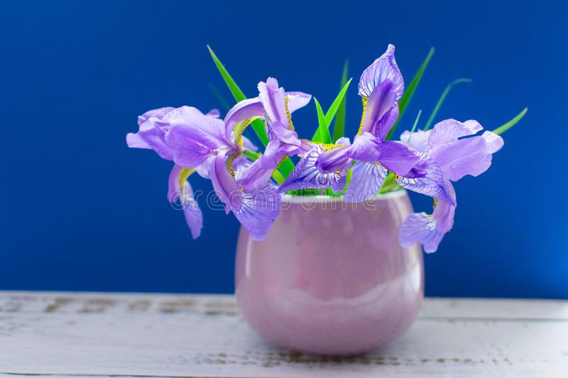 A bouquet of  irises in a small lilac cup on a blue background. royalty free stock photo
