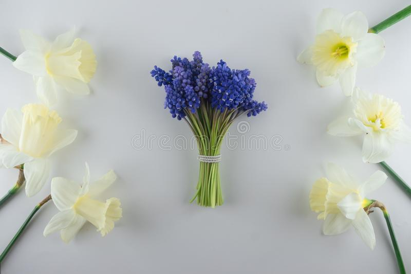 Bouquet of blue Muscari and narcissus. Spring flowers. White background stock photography