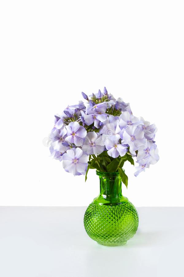 Bouquet of blue phlox in a green glass vase on isolated white table. Bouquet of blue phlox in a green glass vase on isolated white background stock images