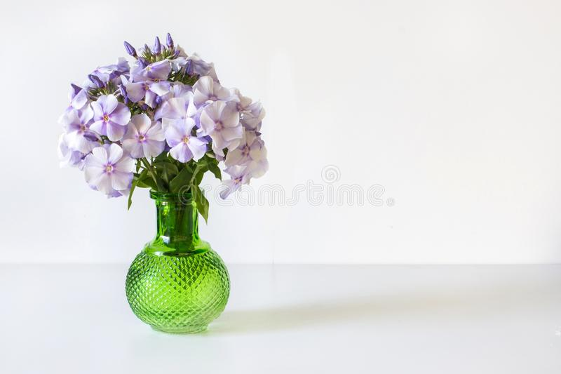Bouquet of blue phlox in a green glass vase on white table. Bouquet of blue phlox in a green glass vase on white background royalty free stock photos