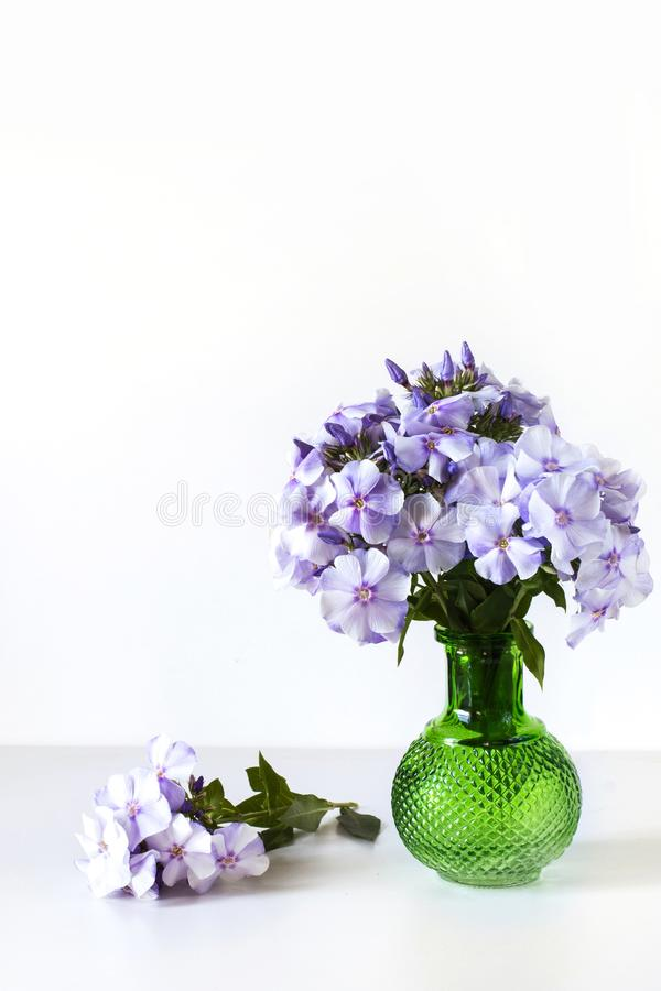 Bouquet of blue phlox in a green glass vase on white table. Bouquet of blue phlox in a green glass vase on white background royalty free stock photo