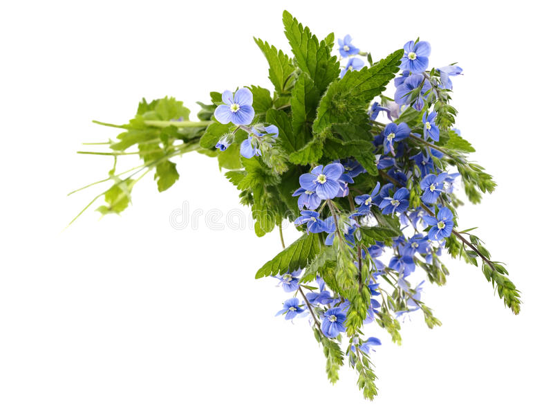 Download Bouquet Of Blue Wild Flowers. Royalty Free Stock Image - Image: 10027606