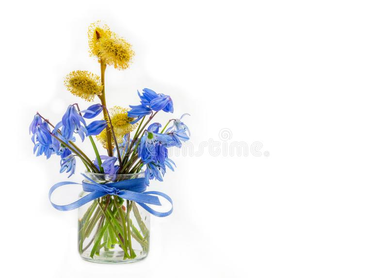 Bouquet of bluebell and a sprig of flowering willow in a glass jar with a bow of blue ribbon on a white background stock images