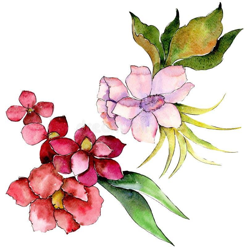 Bouquet botanique floral rouge et pourpre de fleur Positionnement de fond d'aquarelle Élément d'isolement d'illustration de bouqu illustration de vecteur