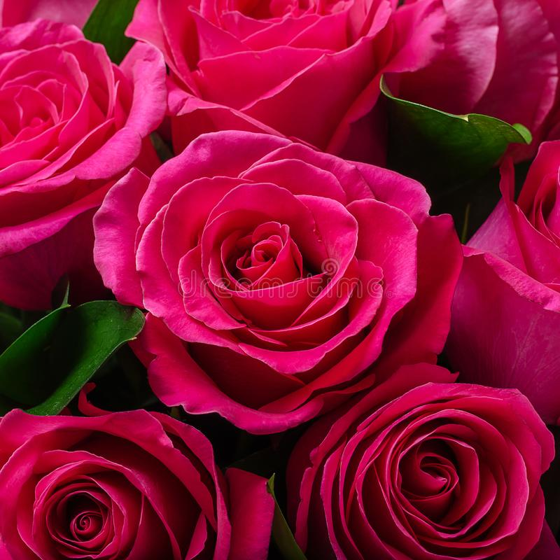 Bouquet of bright pink roses stock image
