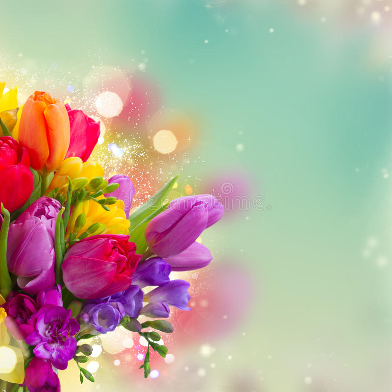 Bouquet of bright spring flowers. Close up over dyed blue bokeh background stock photo