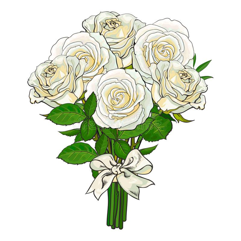 Bouquet, bunch of white roses tied with ribbon. Big bunch, bouquet of white roses tied up with silk ribbon, sketch style, hand drawn vector illustration isolated vector illustration