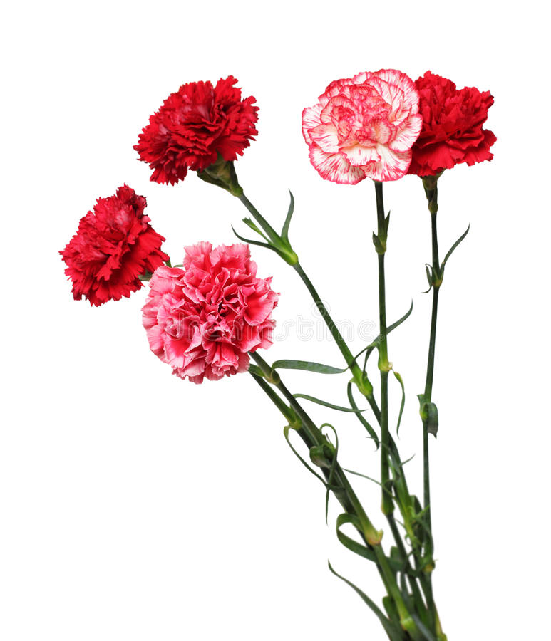 Bouquet of carnation flowers stock image